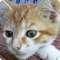 Adopt A Pet :: Brandon - Germantown, MD