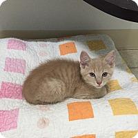 Adopt A Pet :: Manny - Bryan, OH