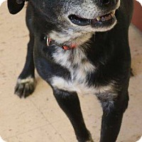 Adopt A Pet :: Patrick - McDonough, GA