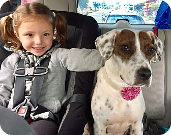 Mountain Cur Mix Dog for adoption in Frederick, Maryland - Moana