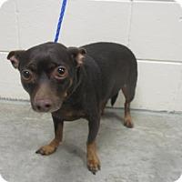 Adopt A Pet :: COFFEE - Reno, NV