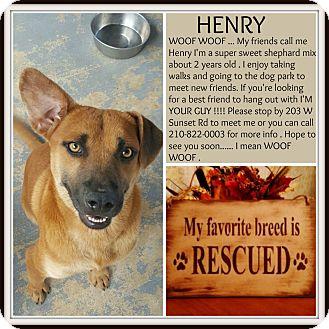 Shepherd (Unknown Type) Mix Dog for adoption in san antonio, Texas - henry