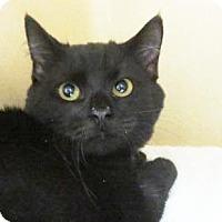 Adopt A Pet :: Mousse  $20 - Lincolnton, NC