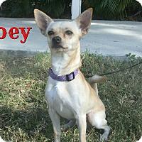 Adopt A Pet :: Joey - Sarasota, FL