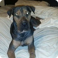 Adopt A Pet :: Journey - Lithia, FL