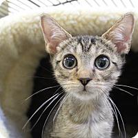 Adopt A Pet :: Sleepy - Sarasota, FL