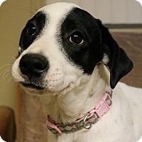 Adopt A Pet :: Panda - Green Bay, WI