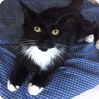 Adopt A Pet :: Nemu - Columbia, SC