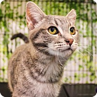 Adopt A Pet :: Bumblebee - Morgan Hill, CA