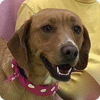Adopt A Pet :: Jersey - Evansville, IN