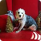 Adopt A Pet :: Lizzy-pending