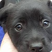 Adopt A Pet :: Happy - chicago, IL