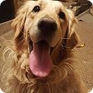 Adopt A Pet :: Gusto