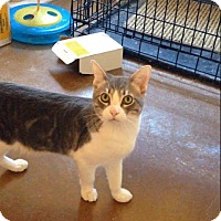 Adopt A Pet :: Billy Boss - Scottsdale, AZ