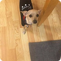 Adopt A Pet :: Peter - Valencia, CA
