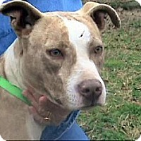 Terrier (Unknown Type, Medium) Mix Dog for adoption in Tyler, Texas - AA-Amber