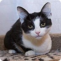 Adopt A Pet :: Miranda - Irvine, CA