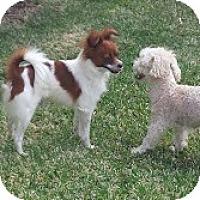 Adopt A Pet :: BUCKY - San Dimas, CA