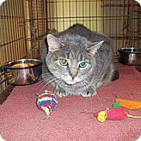Adopt A Pet :: Aston/Gaspy - Acme, PA