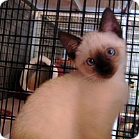 Adopt A Pet :: Flip Flop - Deerfield Beach, FL