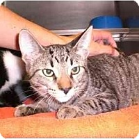 Adopt A Pet :: Hickory - Lombard, IL