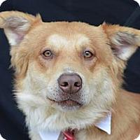 Adopt A Pet :: Monty - Plano, TX