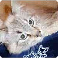 Adopt A Pet :: Maui - Arlington, VA