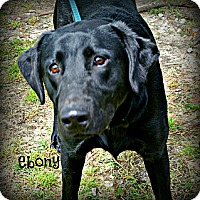 Adopt A Pet :: Ebony - Vancleave, MS