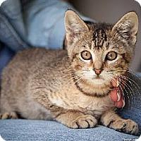Adopt A Pet :: Tule - Davis, CA