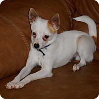 Adopt A Pet :: Amigo - Meridian, ID