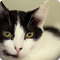Adopt A Pet :: Happy Daiz - Chicago, IL