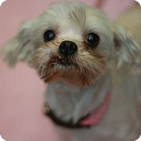 Adopt A Pet :: Sabrina - Canoga Park, CA