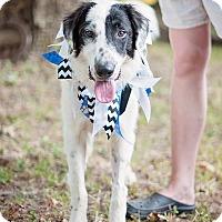 Adopt A Pet :: Sebastian - Houston, TX