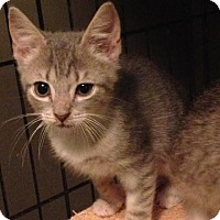 Adopt A Pet :: Rainy - East Brunswick, NJ