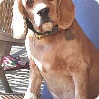 Adopt A Pet :: Aurora - Santa Barbara, CA