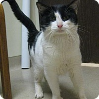 Adopt A Pet :: Domino - Gary, IN