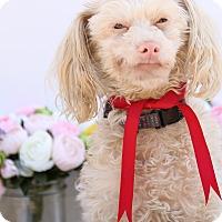Adopt A Pet :: Barney - Auburn, CA