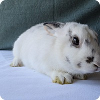 Adopt A Pet :: Hops - Fountain Valley, CA
