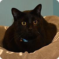 Adopt A Pet :: Monty - Cincinnati, OH