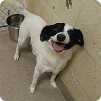 Adopt A Pet :: 1-3 Maze - Triadelphia, WV