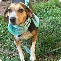 Adopt A Pet :: Roxy - Birmingham, AL
