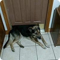 Adopt A Pet :: Buck - Cedar, MN