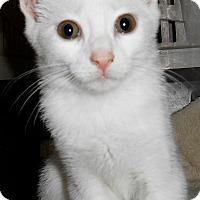 Adopt A Pet :: Vanilla Bean - Chattanooga, TN