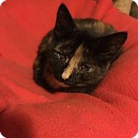 Adopt A Pet :: Kelsey - Toledo, OH