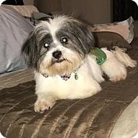 Adopt A Pet :: Cooper - Santa Fe, TX