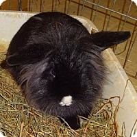 Adopt A Pet :: Felicity - Woburn, MA