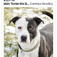 Adopt A Pet :: Cagney - Urgent! - Zanesville, OH