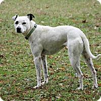 Adopt A Pet :: Cuddles - Lufkin, TX