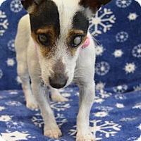 Adopt A Pet :: Taylor - Buena Vista, CO