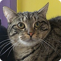 Adopt A Pet :: David Tennant - Richboro, PA